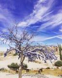 Een boomhoogtepunt die van blauwe ogen (kwade ogen), zich op het gebied bevinden Stock Foto's