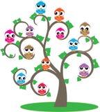 Een boomhoogtepunt van kleurrijke uilen Stock Foto's