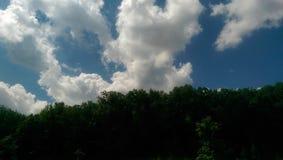 Een boomlijn Stock Foto's