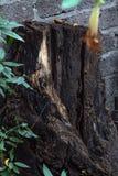 Een boomstam in de tuin royalty-vrije stock fotografie