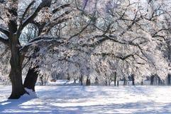 Een boomtak in de de winterzon Royalty-vrije Stock Afbeelding