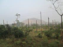 Een boomverscheidenheid ziet eruit stock foto