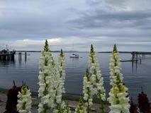 Een boot tussen de bloemen Stock Afbeeldingen