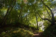 In een bos Stock Foto's
