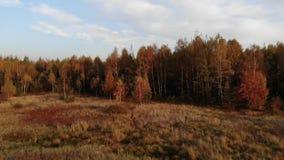 Een bos gebade open plek stock videobeelden