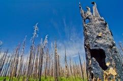 Een bos na recente wildfire. Stock Foto's
