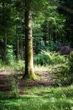 Een bos in Schotland royalty-vrije stock afbeelding