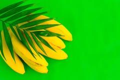 Een bos van bananen en een palmblad op een heldergroene achtergrond royalty-vrije stock fotografie