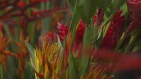 Een bos van bloemen stock footage