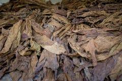 Een bos van droge tabakken in Dhaka, manikganj, Bangladesh Royalty-vrije Stock Fotografie