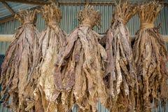 Een bos van droge tabakken in Dhaka, manikganj, Bangladesh Royalty-vrije Stock Foto's