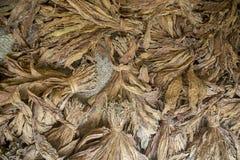 Een bos van droge tabakken in Dhaka, manikganj, Bangladesh Stock Afbeelding