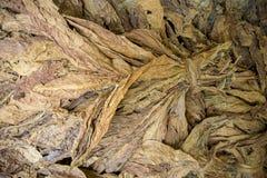 Een bos van droge tabakken in Dhaka, manikganj, Bangladesh Stock Foto
