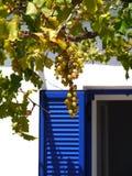 Een bos van druiven en een blauw blind royalty-vrije stock fotografie
