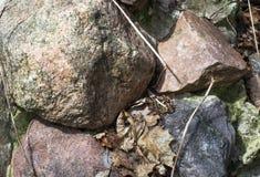 Een bos van gekleurde stenen in gevallen bladeren Royalty-vrije Stock Foto