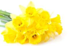 Een bos van gele narcissen Stock Afbeelding