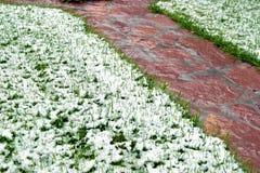 Een bos van groen die gras met sneeuw in het eind van November wordt behandeld stock afbeelding