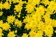 Een bos van horizontale zonnebloemen - stock foto's