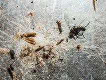 Een bos van insect in een spin` s Web wordt geplakt heeft een abstract patroon dat gemaakt Royalty-vrije Stock Afbeelding