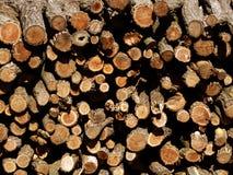 Een bos van logboeken Stock Afbeelding