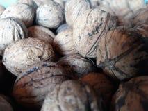 Een bos van noten royalty-vrije stock fotografie