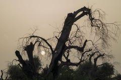 Een bos van olijf Royalty-vrije Stock Afbeeldingen