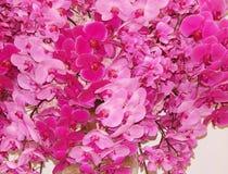Een bos van orchideeën als bloemachtergrond Stock Foto