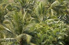Een bos van palmen royalty-vrije stock afbeeldingen