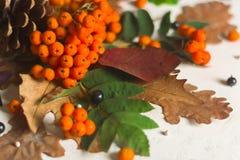 Een bos van rijpe oranje lijsterbes met groene bladeren De droge bladeren van de herfst Zwarte Bessen Wit steen of pleister stock foto's