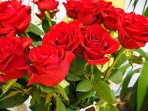 Een bos van rode rozen royalty-vrije stock afbeeldingen