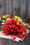 Een bos van rode viburnum op een donkere houten achtergrond Giften van de herfst Stock Foto's