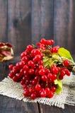 Een bos van rode viburnum op een donkere houten achtergrond Giften van de herfst Stock Afbeeldingen
