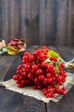 Een bos van rode viburnum op een donkere houten achtergrond Giften van de herfst Stock Foto