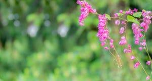 een bos van roze bloemen royalty-vrije stock afbeeldingen