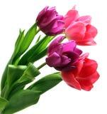 Bos van purpere en roze tulpen stock afbeeldingen