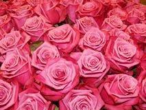 Een bos van rozen als bloemachtergrond Stock Afbeeldingen