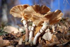 Een bos van wilde paddestoelen in de herfst. stock afbeelding