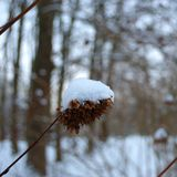 Een bos van zaden in sneeuw worden behandeld die Royalty-vrije Stock Foto
