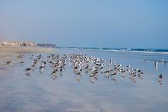 Een bos van zeemeeuwen op het strand Royalty-vrije Stock Fotografie