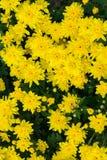 Een bos van zonnebloemen - verticaal stock foto's