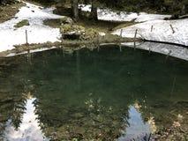 Een bosbron en een klein meer met een bar onder de bergbovenkant van Alp Sigel en in het Appenzellerland-gebied stock foto