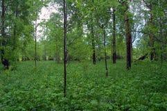 Een bosje met een rijk kreupelhout royalty-vrije stock afbeeldingen