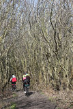 In een bosje onder de duinen van het Eiland Sylt Royalty-vrije Stock Afbeeldingen