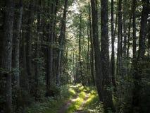 Een bosopheldering met mooie zonnestralen royalty-vrije stock afbeelding