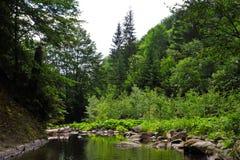 Een bosstroom of een meer onder bomen met stenen royalty-vrije stock afbeelding