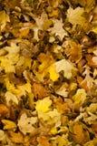 Een bosvloer van bladeren in de herfst Royalty-vrije Stock Fotografie