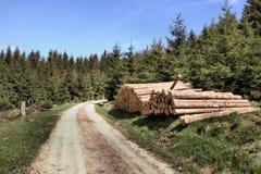 Een bosweg Royalty-vrije Stock Afbeeldingen