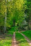 Een bosweg Stock Afbeeldingen