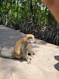 Een boze aap royalty-vrije stock foto's