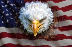 Een boze Noordamerikaanse kale adelaar op Amerikaanse vlag stock afbeeldingen